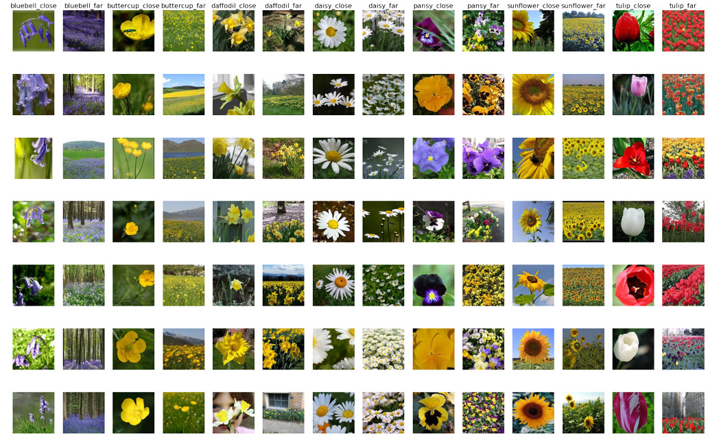 Examples flower images from all near/far classes